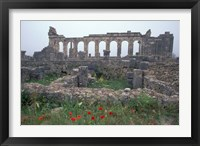 Framed Red Poppies near Basilica in Ancient Roman City, Morocco