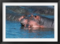 Framed Mother and Young Hippopotamus, Serengeti, Tanzania