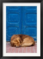 Framed Sleeping Dog, Essaouira, Morocco