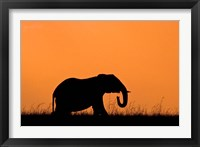 Framed Silhouette of Elephant at sunset, Masai Mara National Reserve, Kenya
