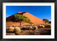 Framed Trees with Sossosvlei Dunes, Namib-Naukluff Park, Namibia