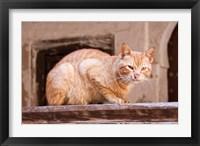 Framed Stray Cat in Fes Medina, Morocco