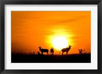 Framed Topi wildlife, Masai Mara GR, Kenya