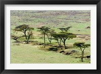 Framed Bush, Maasai Mara National Reserve, Kenya