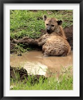 Framed Spotted Hyaena, wildlife, Hluhulwe GR, South Africa