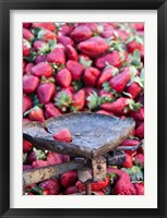 Framed Strawberries for sale in Fes medina, Morocco