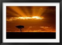 Framed Sunrise, Maasai Mara, Kenya