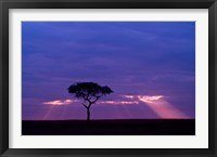 Framed Blue skies, Maasai Mara, Kenya