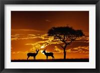 Framed Umbrella Thorn Acacia and Impala, Masai Mara Game Reserve, Kenya