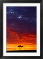 Framed Masai Mara Game Reserve, Kenya