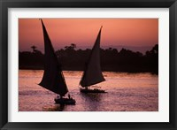 Framed Traditional Feluccas Set Sail on the Nile River, Egypt