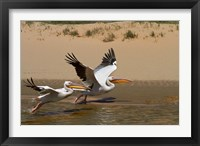 Framed White Pelicans, Sandwich Harbor, Namib-Naukluft, Namibia