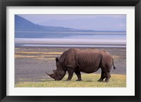 Framed White Rhinoceros, Lake Nakuru National Park, Kenya
