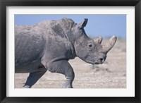 Framed White Rhino Running, Etosha Salt Pan, Etosha National Park, Namibia