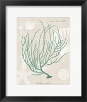 Gorgonia Miniacea on Linen Sea Foam Framed Print