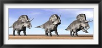 Framed Three Zuniceratops standing in the desert