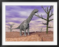Framed Argentinosaurus standing on the cracked desert ground next to dead trees
