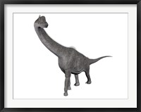 Framed Brachiosaurus dinosaur, white background