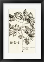 Tropical Leaf Study II Framed Print