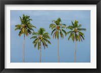 Framed Coconut trees in Backwaters, Kerala, India