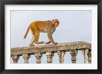 Framed Monkey, Varanasi, India