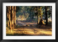 Framed Rural Road, Kanha National Park, India