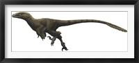 Framed Utahraptor ostrommaysorum