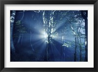 Framed Misty rays in a dark forest, Liselund Slotspark, Denmark