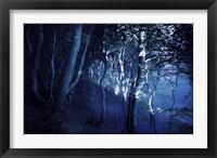Framed Dark forest, Liselund Slotspark, Denmark