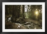 Framed Small stream in a forest at sunset, Pirin National Park, Bulgaria