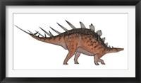 Kentrosaurus dinosaur, white background Framed Print