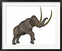 Framed Large mammoth, white background