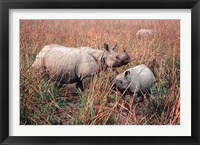 Framed Indian Rhinoceros in Kaziranga National Park, India