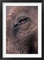 Framed Asian Elephant's Eye, Kaziranga National Park, India