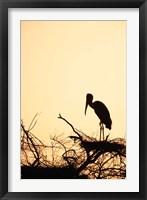 Framed Painted Stork in Bandhavgarh National Park, India