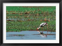 Framed Painted Stork by the water, India