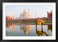 Framed Young Boy on Camel, Taj Mahal Temple Burial Site at Sunset, Agra, India