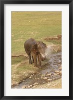 Framed Elephant at waterhole, Corbett NP, Uttaranchal, India