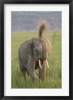 Framed Elephant dust bath, Corbett NP, Uttaranchal, India