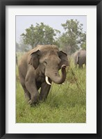 Framed Elephant Greeting, Corbett National Park, Uttaranchal, India