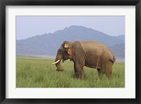 Framed Elephant in the grass, Corbett NP, Uttaranchal, India