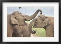 Framed Elephants Play Fighting, Corbett National Park, Uttaranchal, India