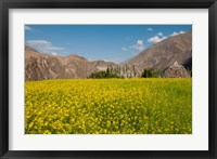Framed Mustard flowers and mountains in Alchi, Ladakh, India