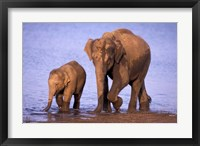 Framed Pair of Asian Elephants, Nagarhole National Park, India