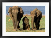 Framed Asian Elephant Family, Nagarhole National Park, India
