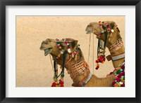 Framed Decorated Camel in the Thar Desert, Jaisalmer, Rajasthan, India