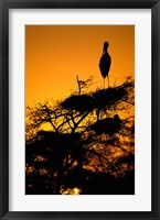 Framed Silhouette of Painted Stork, Keoladeo National Park, Rajasthan, India