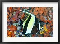 Framed Fish, Raja Ampat, Papua, Indonesia