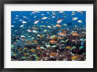 Framed Sea of fish and coral, Raja Ampat, Papua, Indonesia
