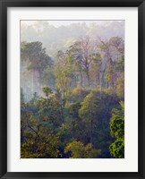 Framed Sulawesi Tangkoko Rainforest, Sulawesi